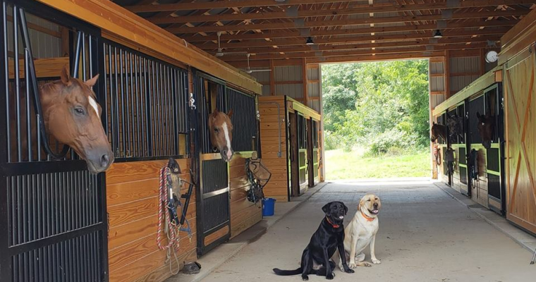 Barn with Horses and Dogs